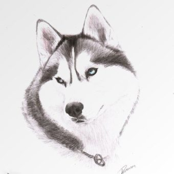 adde507da33e35d4b8bf5339e3bdee7e—husky-siberiano-siberian-huskies-min