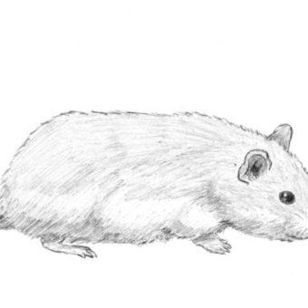 drawn-hamster-sea-367353-6671239-min