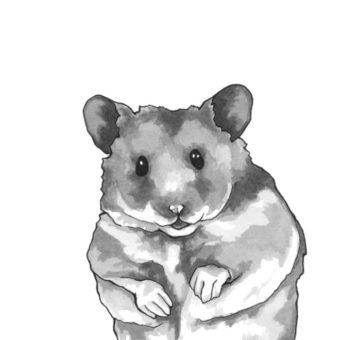e0359cdcf783e79b115625ae645d6687—hamsters-animal-paintings-min