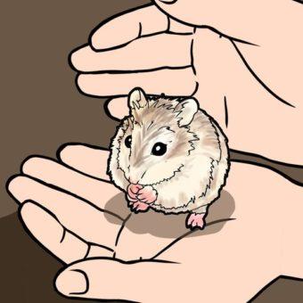 f753cf932fbfa0dfd87a23272066b4b2—hamster-care-hamster-stuff-min