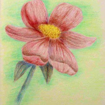 flower-sketch-for-kids-37-min