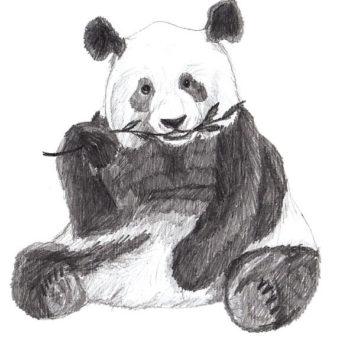 panda-risunok-karandashom7-min