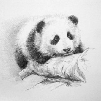 panda_drawing_full-768×618-min