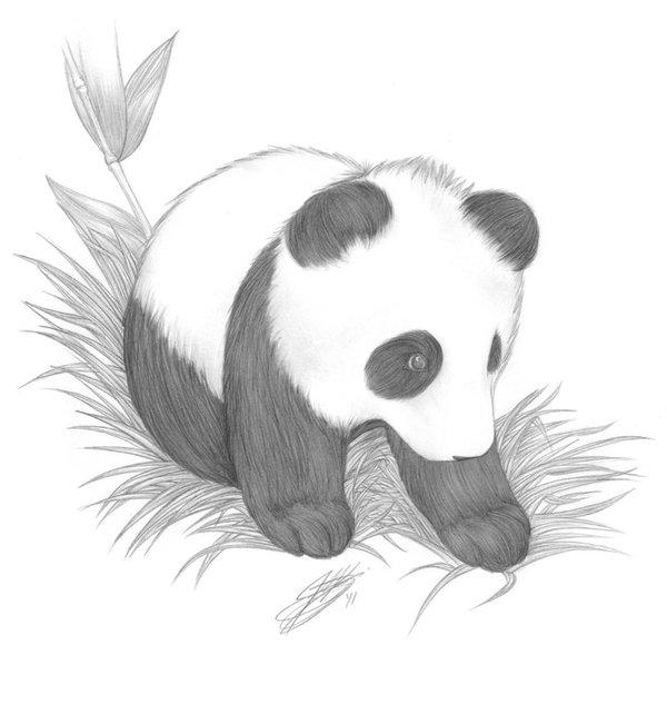Картинки для срисовки пандочка