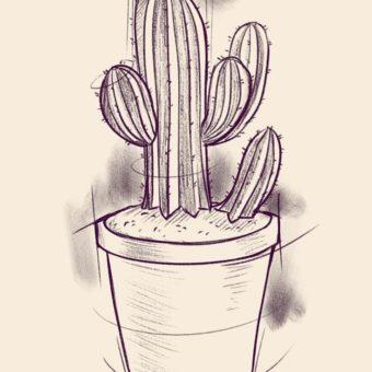 kaktus-v-gorshke-4